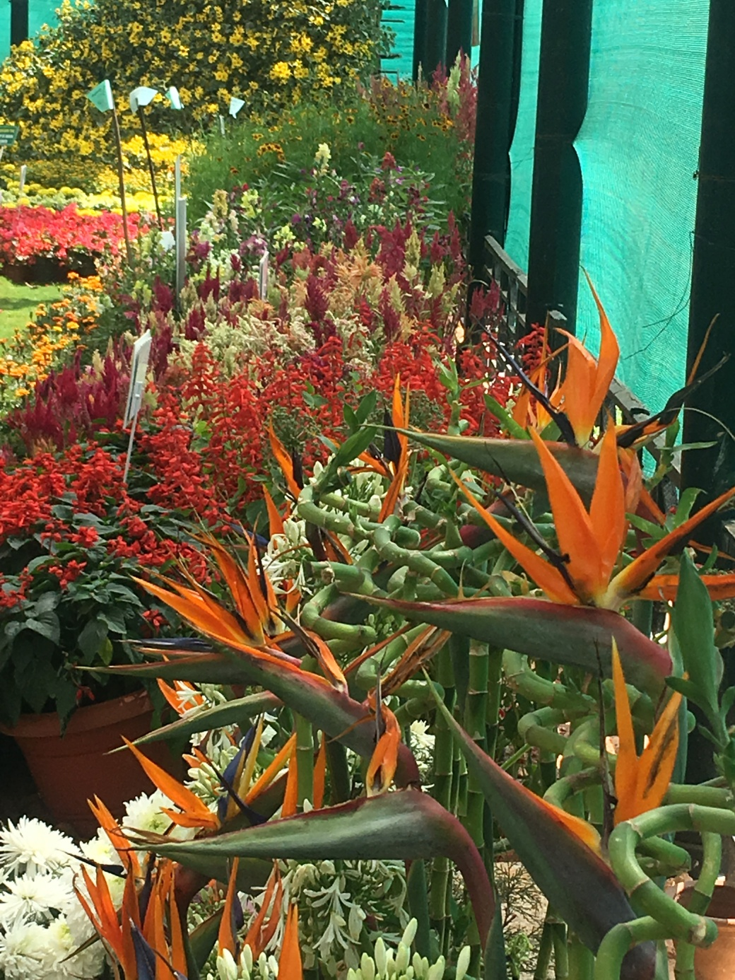 Fleurs Lalbagh Botanic Garden (2)