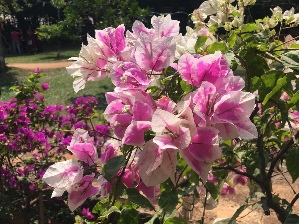 Fleurs Lalbagh Botanic Garden (6)