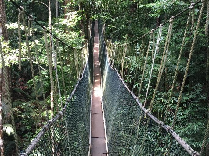 Canopy walk Teman Negara (1)