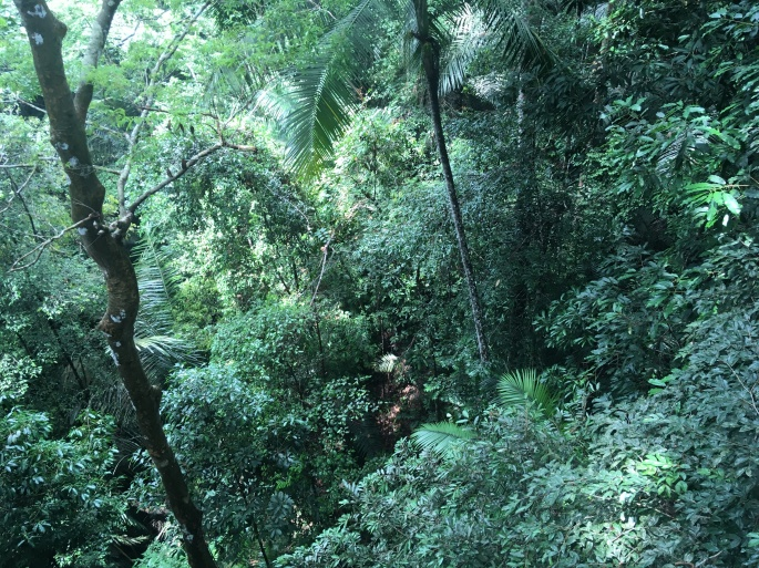 Canopy walk Teman Negara (2)