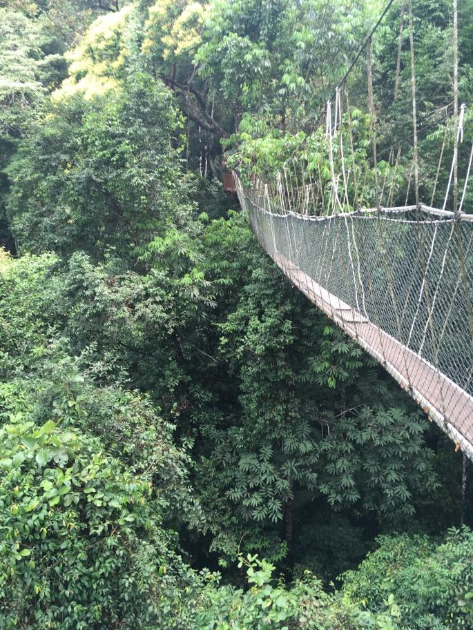 Canopy walk Teman Negara (3)