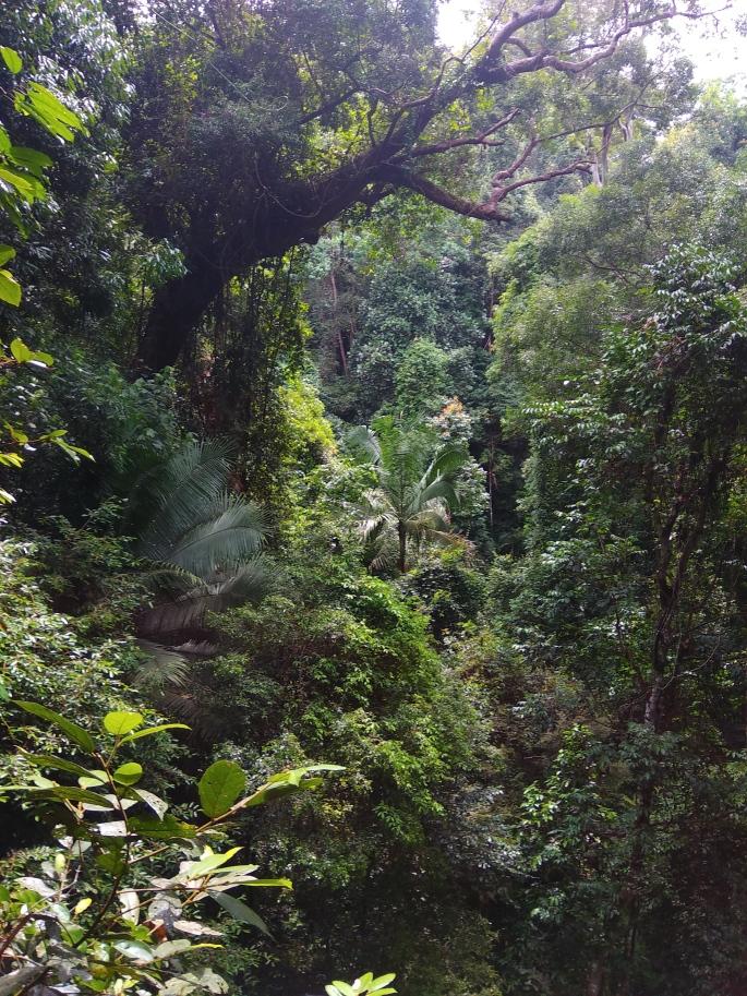 Canopy walk Teman Negara (6)