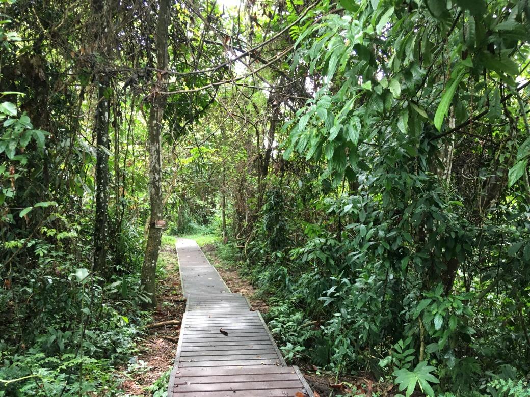 Chemin de trek Teman Negara (1)