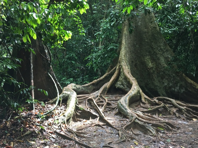 Chemin de trek Teman Negara (2)