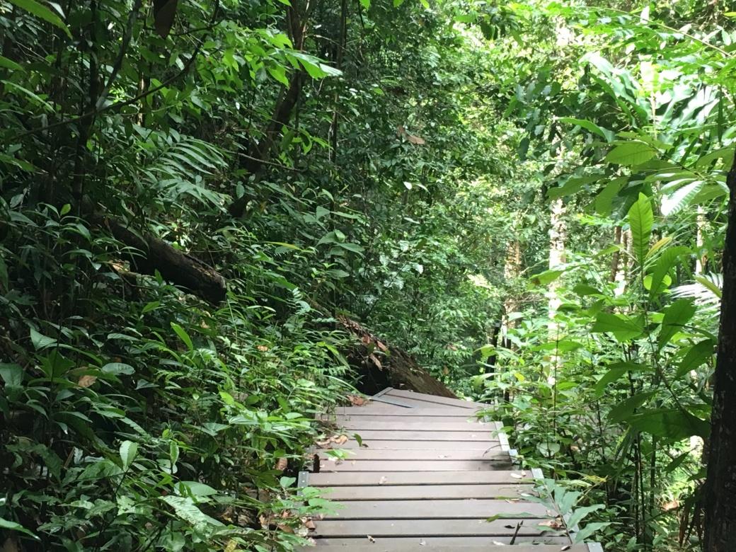 Chemin de trek Teman Negara (3)