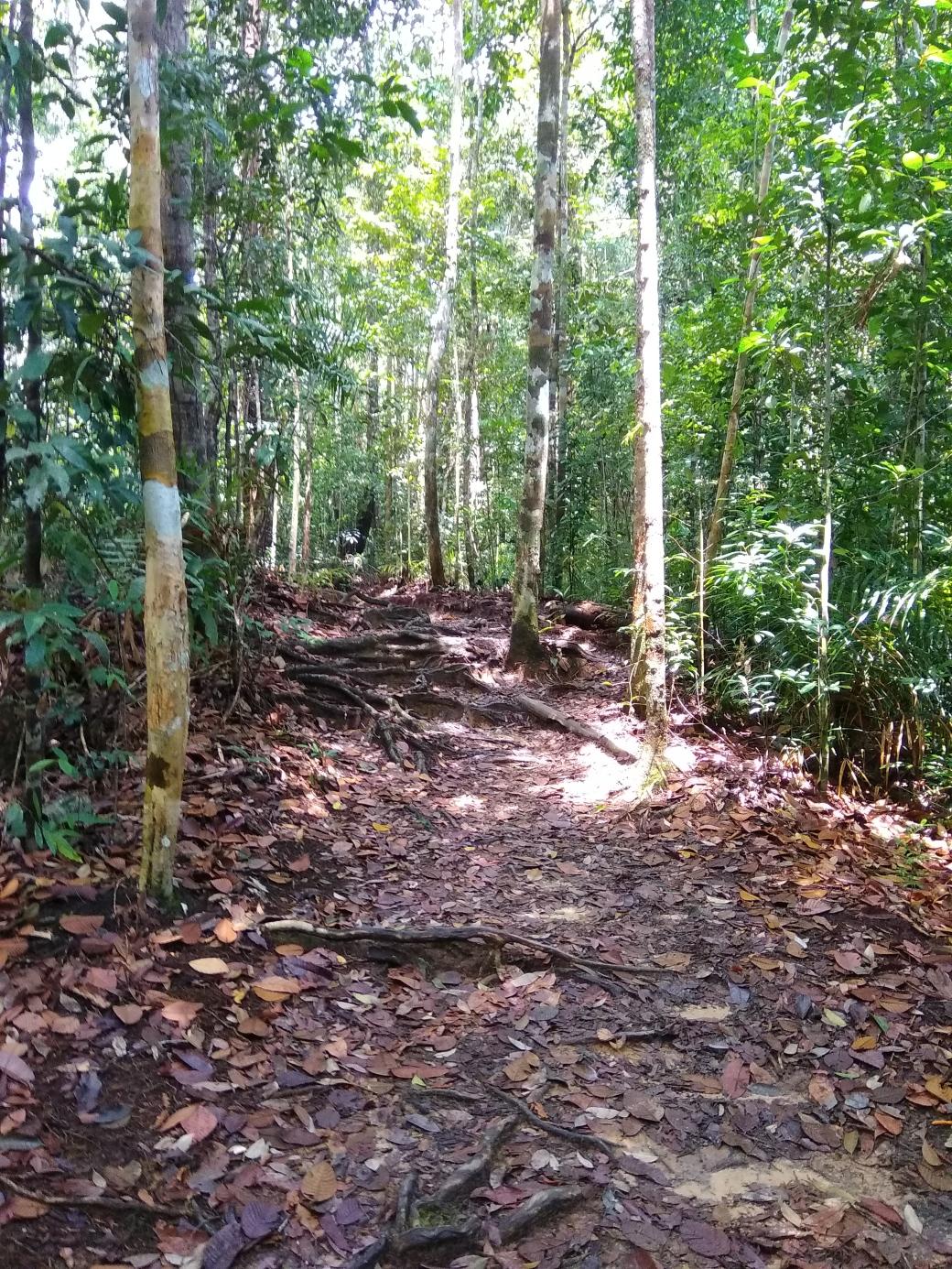 Chemin de trek Teman Negara (5)