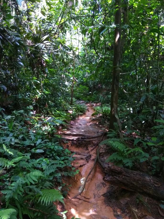 Chemin de trek Teman Negara (6)