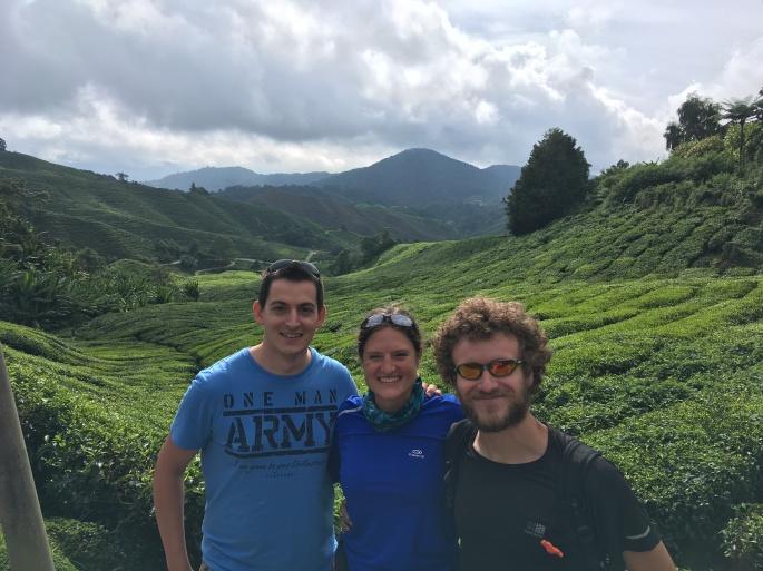 Plantations de thé, Cameron Highlands tea plantations