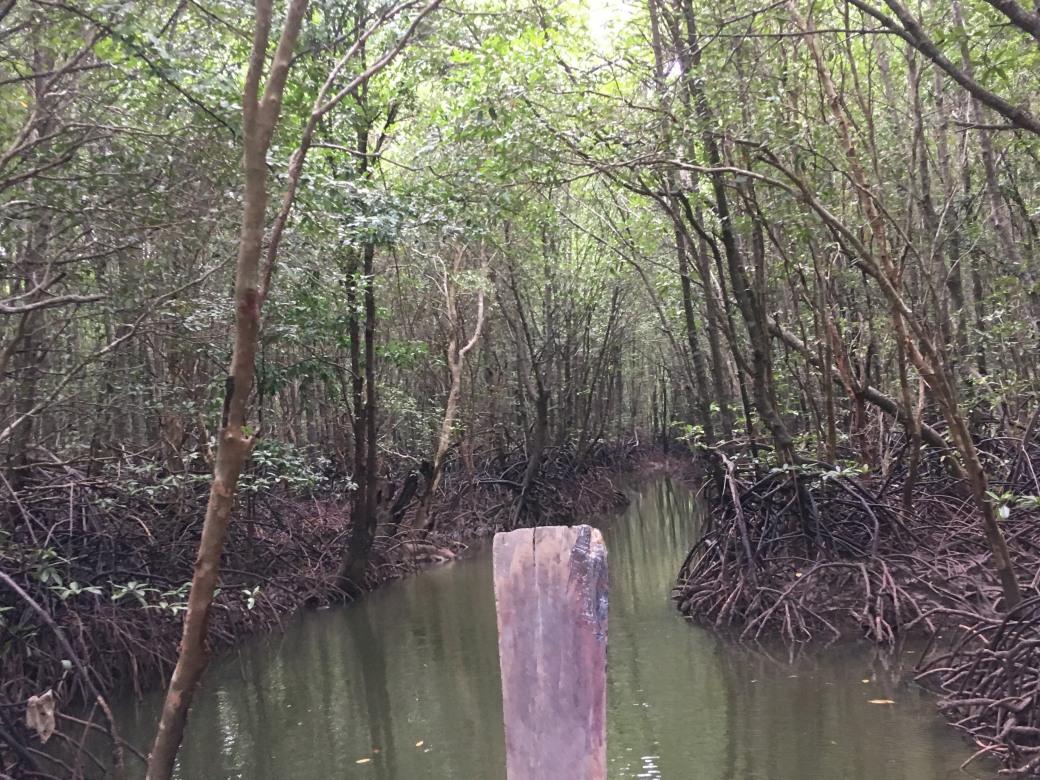 Mangroves (1).jpg