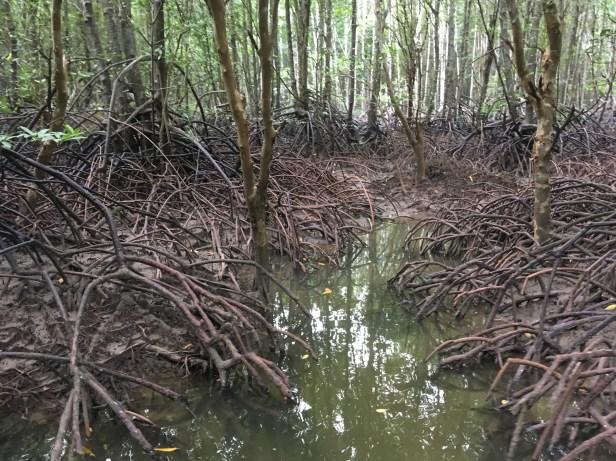 Mangroves (2).jpg