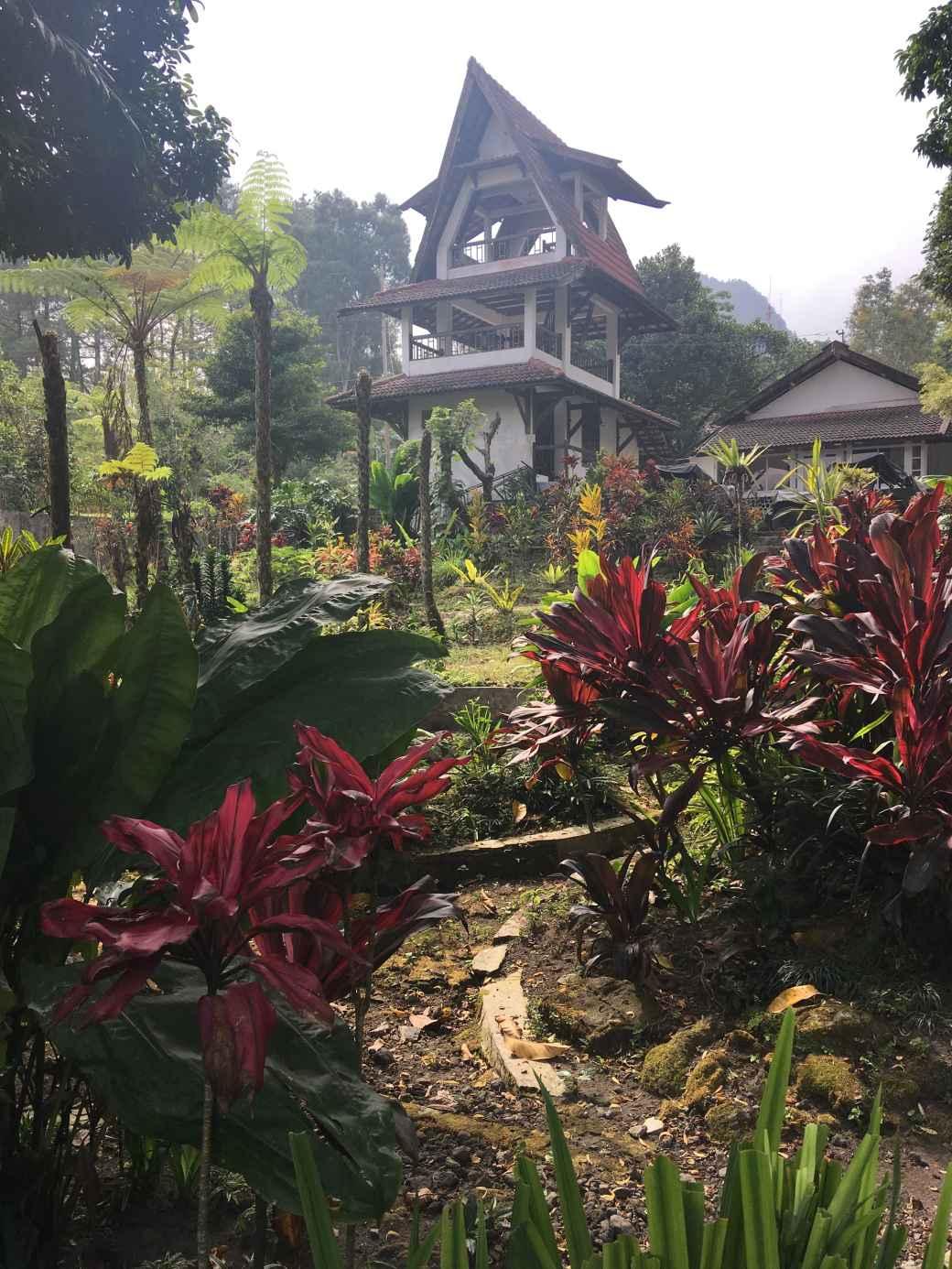 Merapi nature (1)
