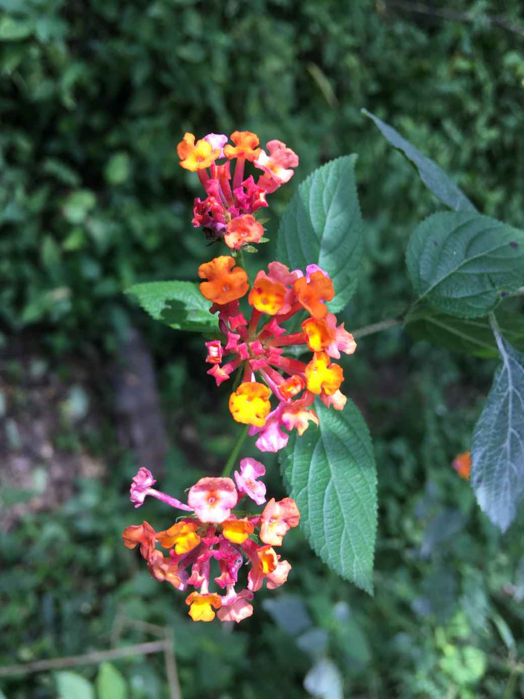 Random flowers (2)-min