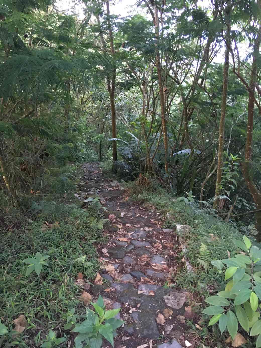 Way to Merapi (1)