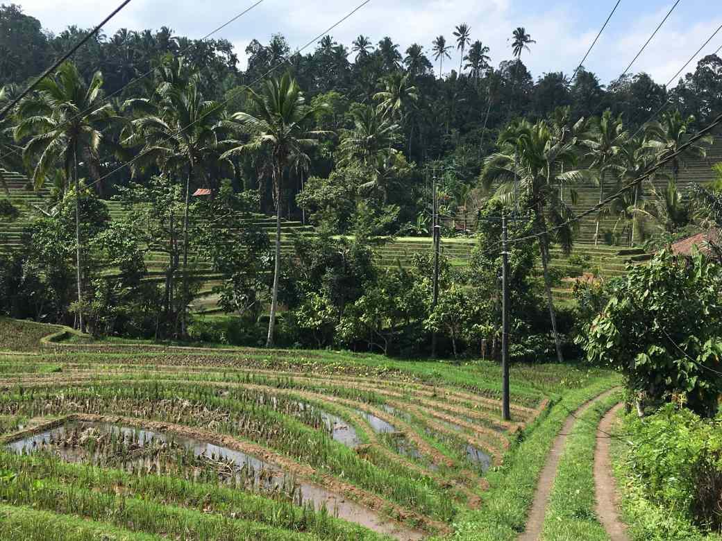 Bali Campagne (1)