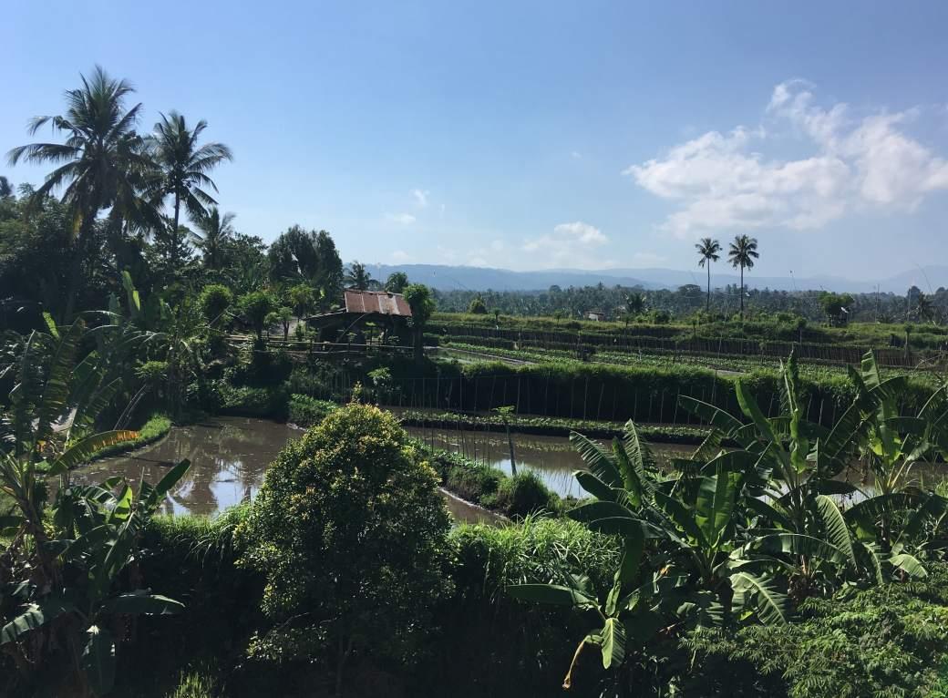 Bali Campagne (2)