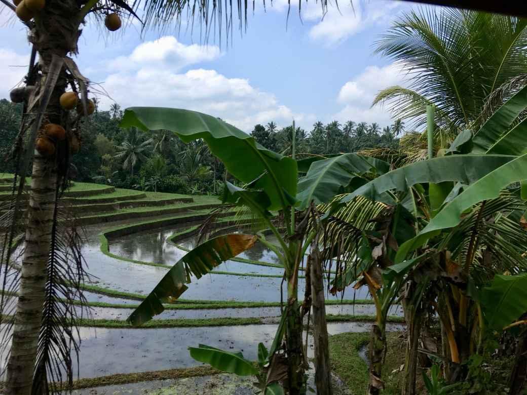 Bali Campagne (3)