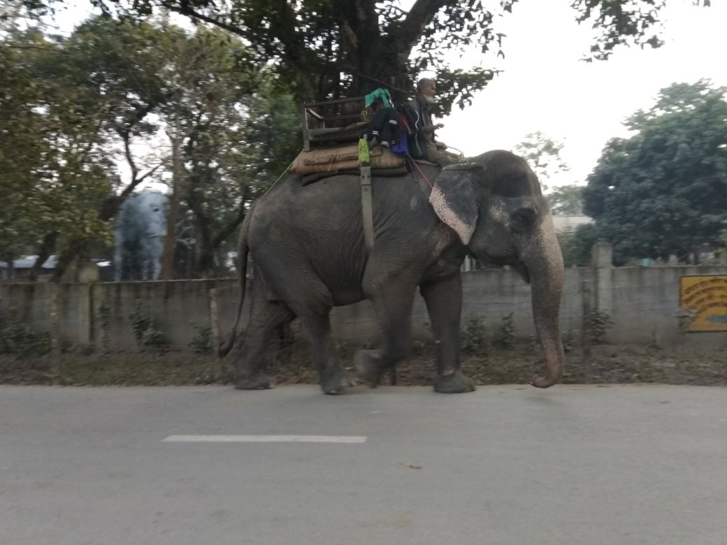 Chitwan Elephant Breeding Centre (1)