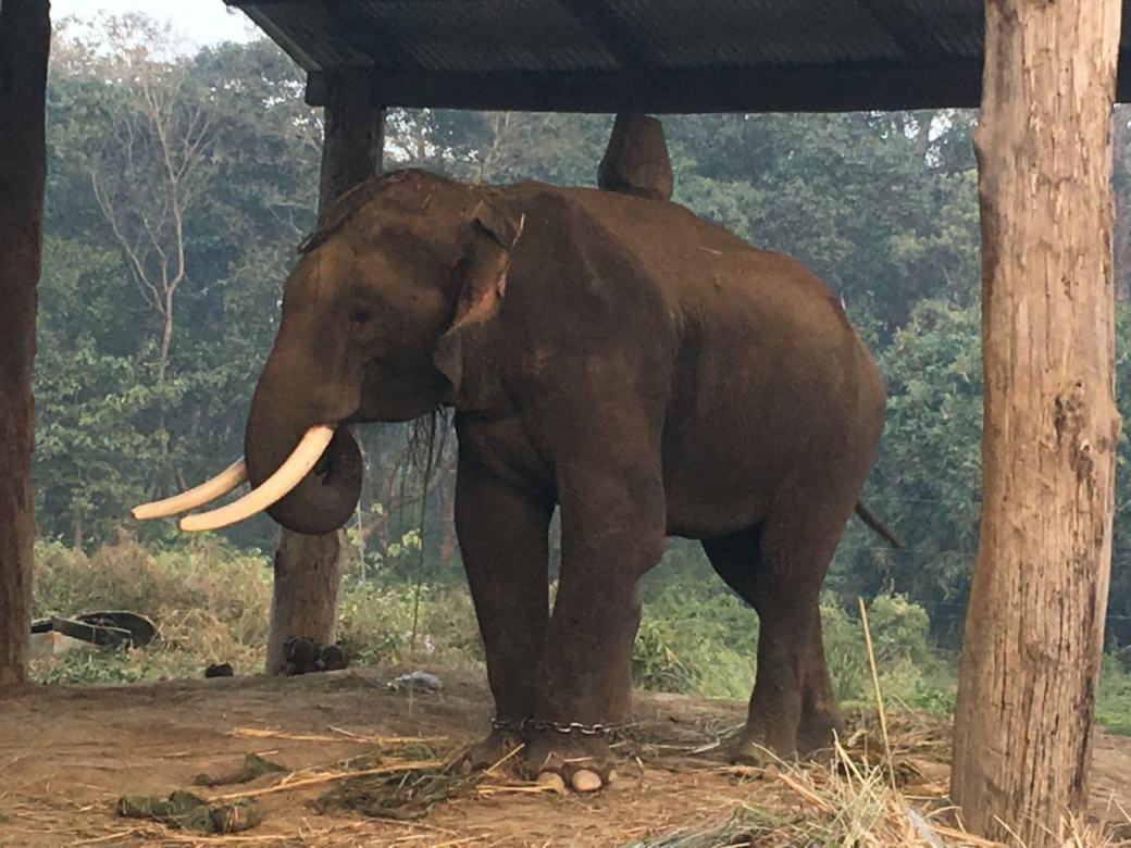 Chitwan Elephant Breeding Centre (3)