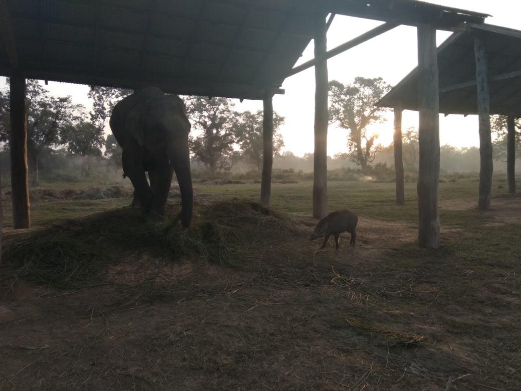 Chitwan Elephant Breeding Centre (4)