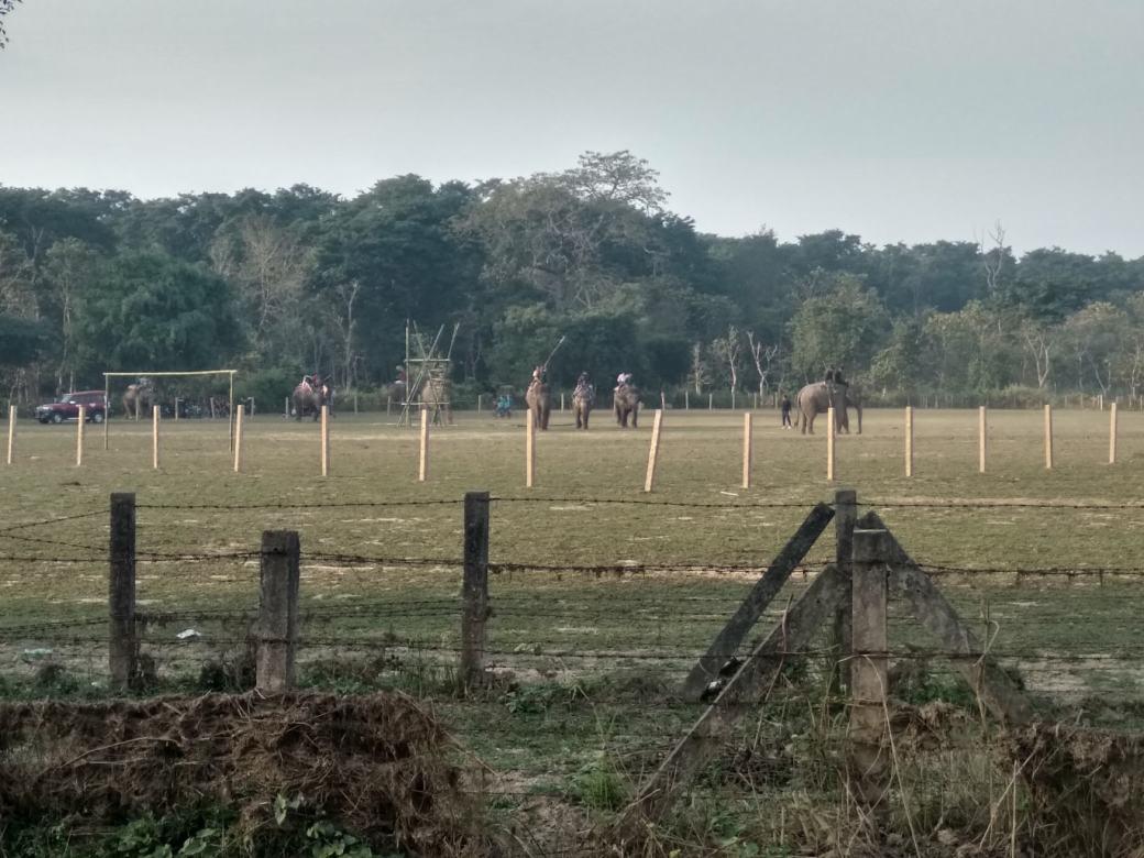 Chitwan Elephant Breeding Centre (5)