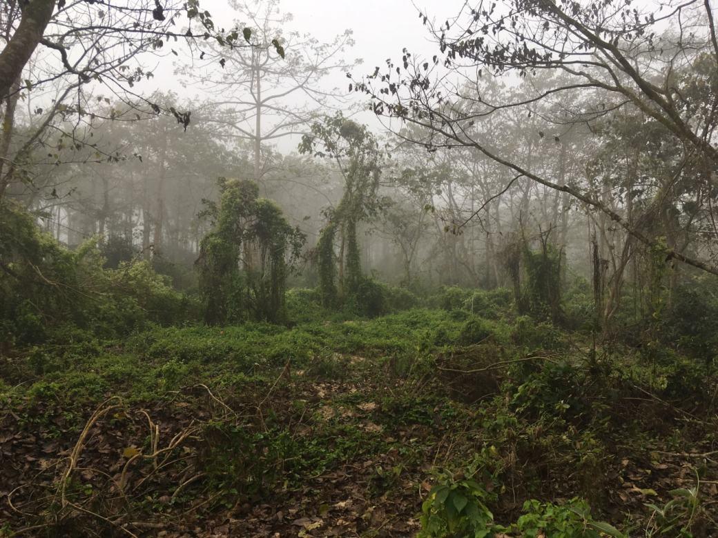 Chitwan Safari Walk (10)