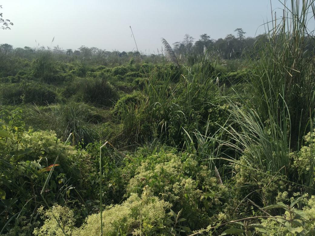 Chitwan Safari Walk (15)