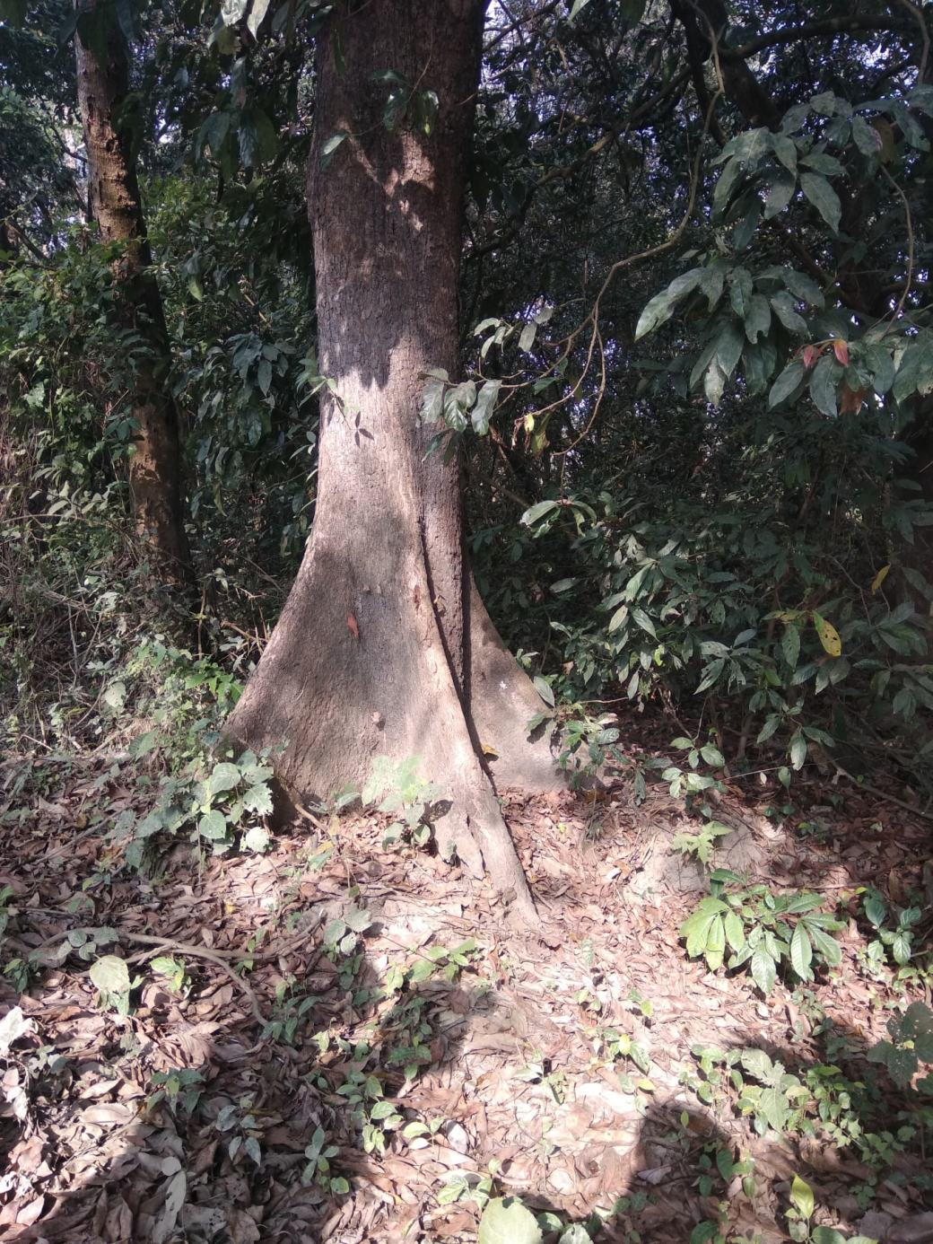 Chitwan Safari Walk (25)