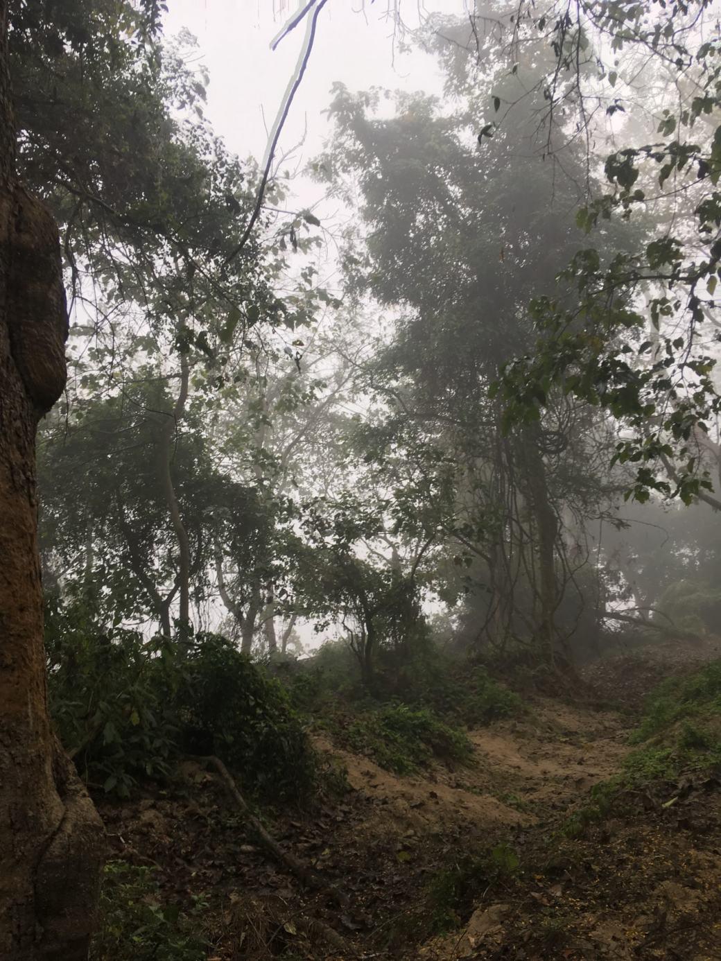 Chitwan Safari Walk (4)