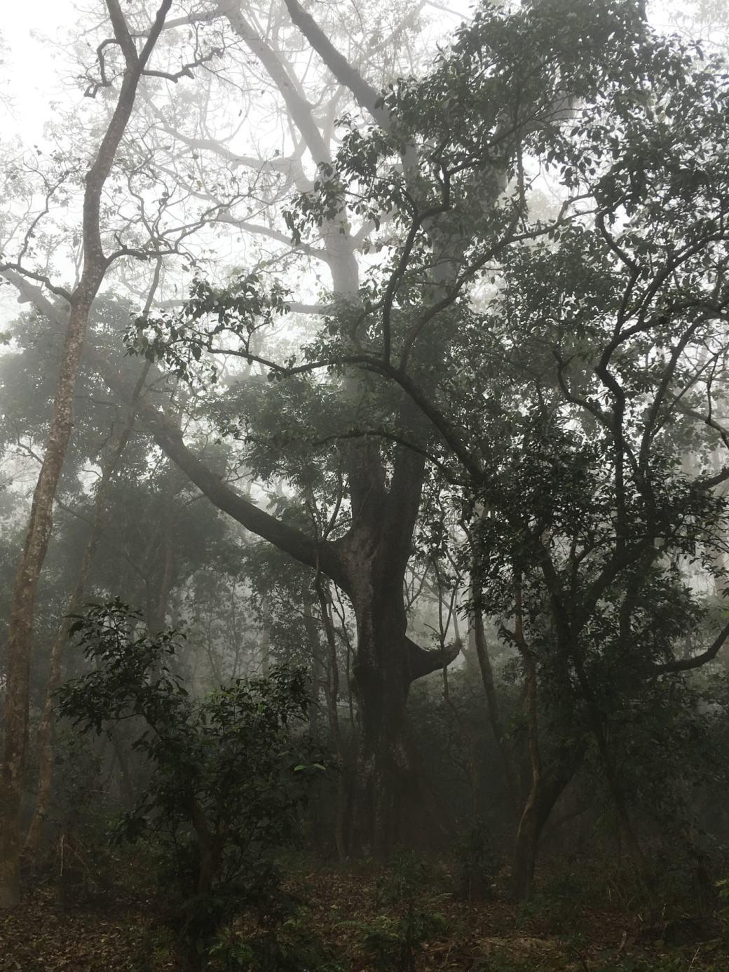 Chitwan Safari Walk (5)