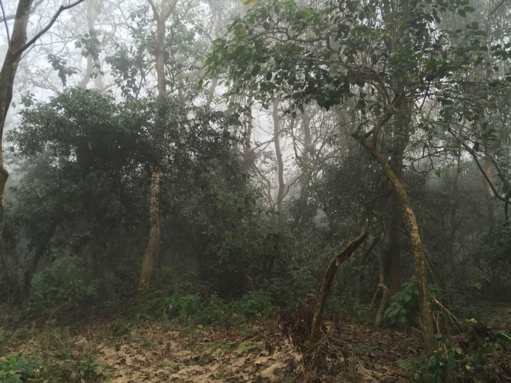 Chitwan Safari Walk (6)