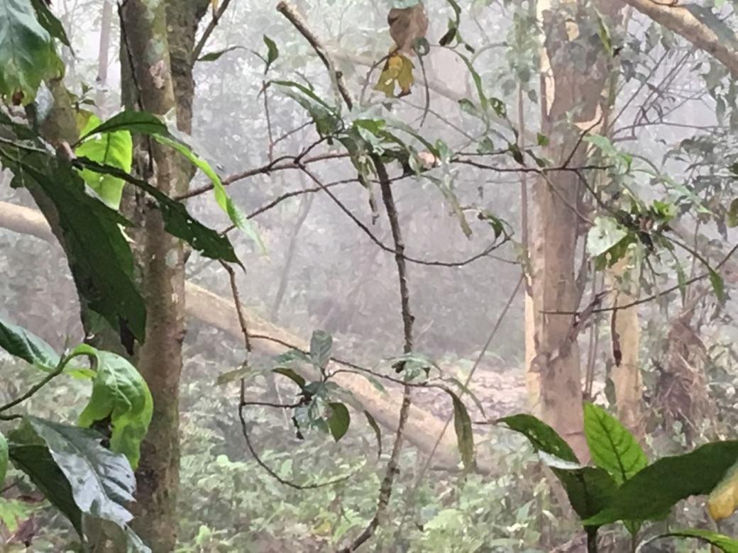 Chitwan Safari Walk (7)