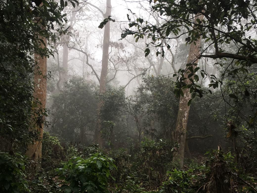 Chitwan Safari Walk (8)
