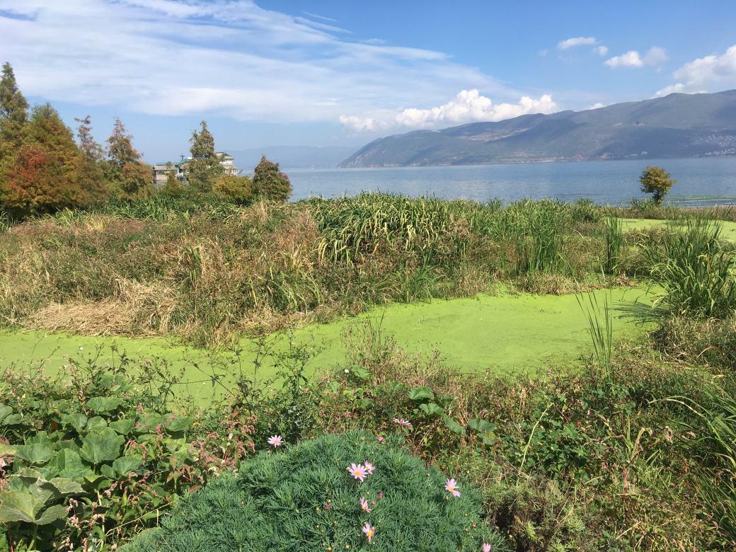 Erhai Lake Dali (3)