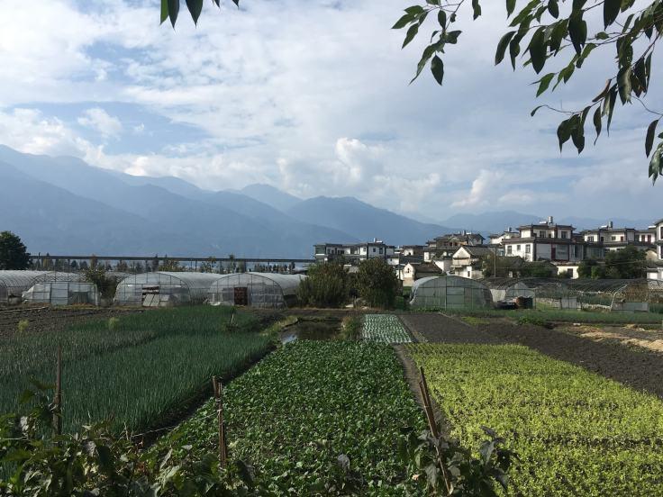 Erhai Lake Dali (7)