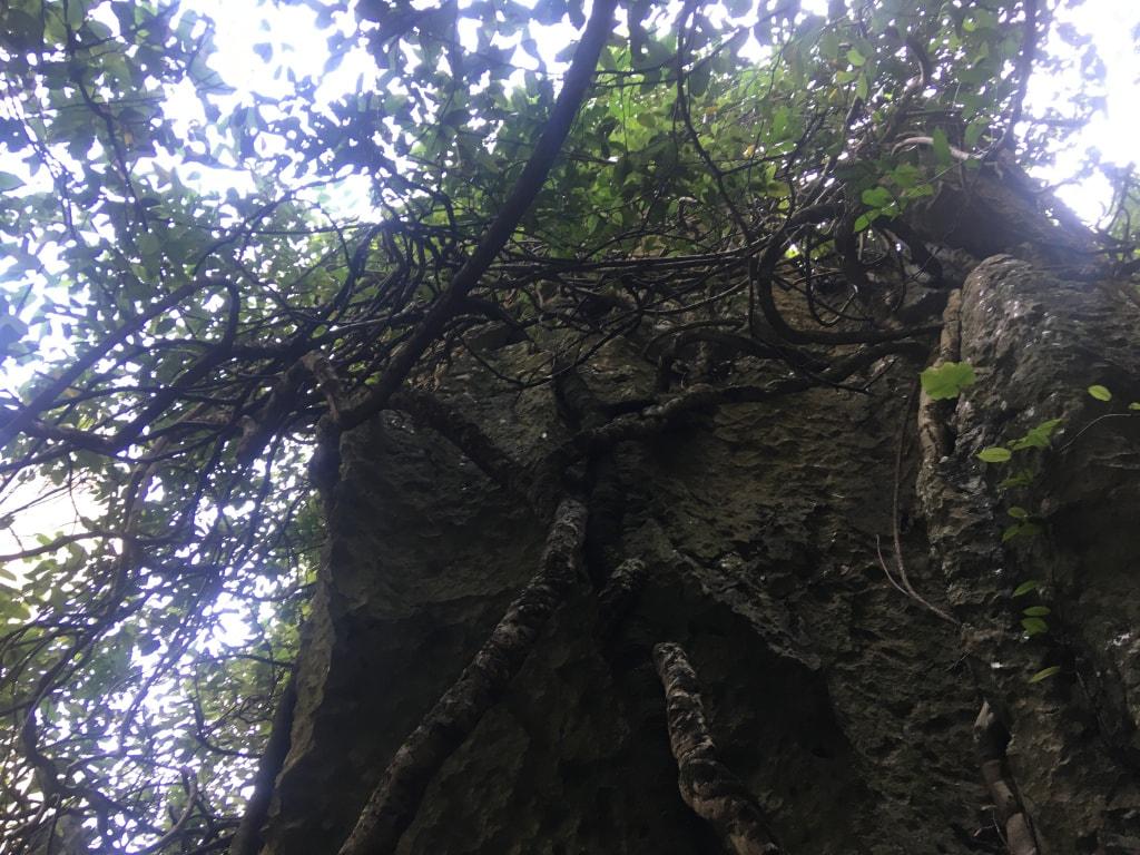 Foret de pierres Shilin (17)