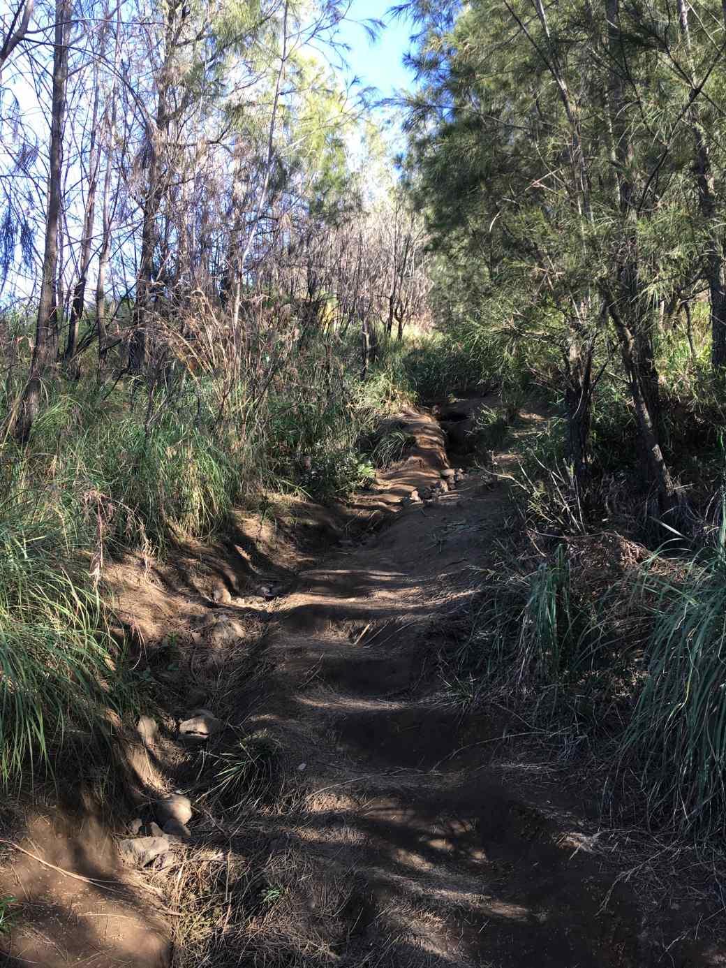 Path to king Kong Hill sunrise Bromo (6)-min