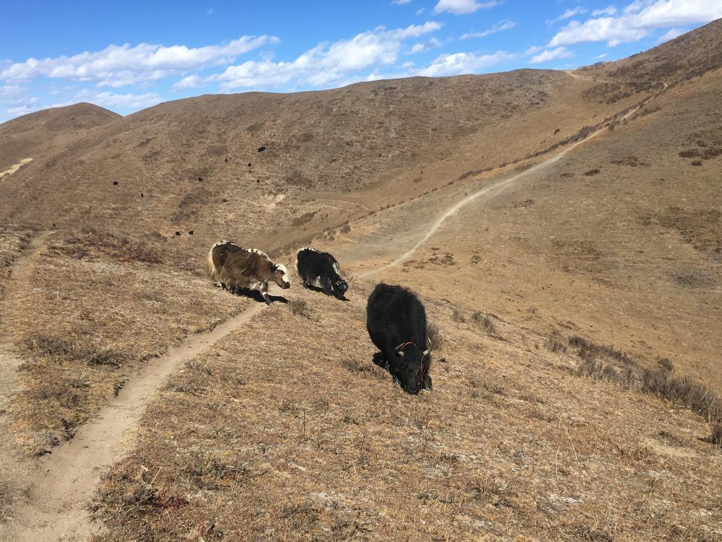 Tagong trekking (6)