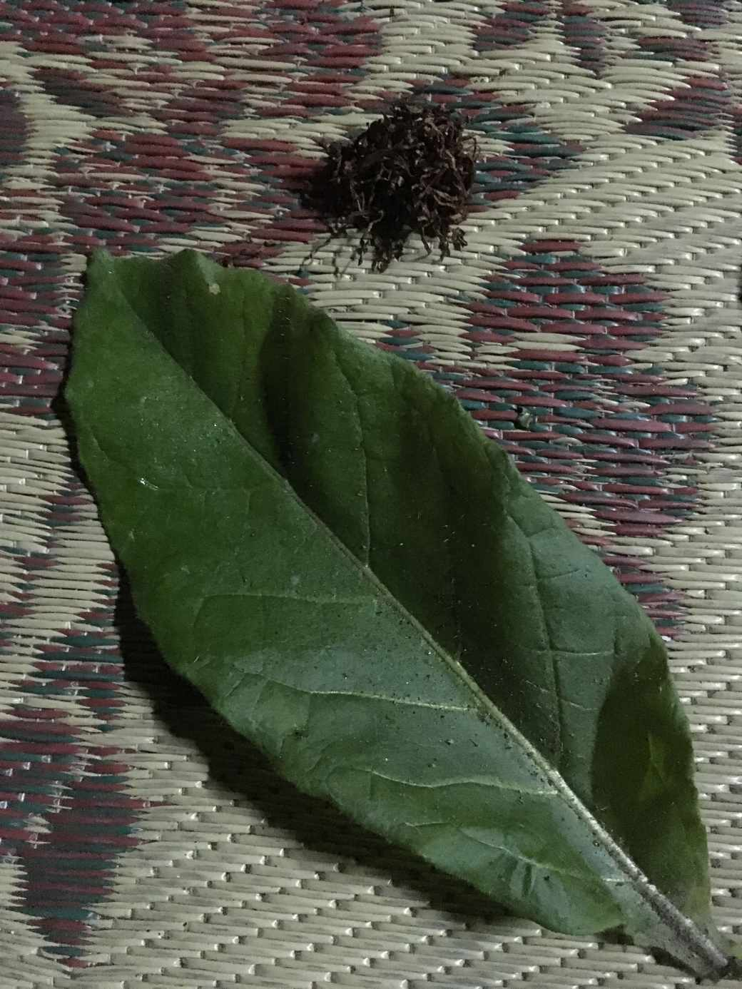 Tobacco leaf-min